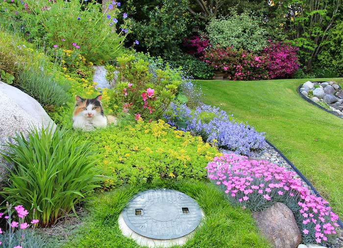 Planting on your Septic Drainfield
